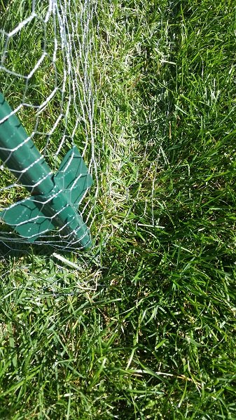 Keeping Rabbits Out Of My Garden Cheap And Simple